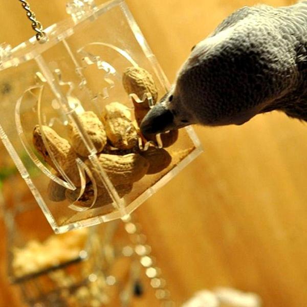 20X (Pappagallo Alimentazione Scatola PET Bird procacciarsi Alimentatore Scatole da appendere GABBIA Swing C S7I3)