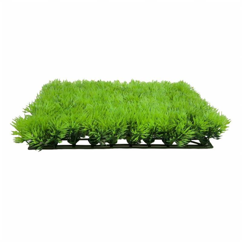 Maceta hierba de agua semillas de acuario Facil planta viva acuatica Orname C7U1