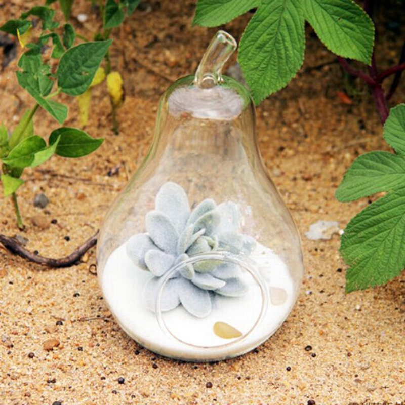 1X-Vase-a-fleurs-en-verre-transparent-la-decoration-de-fleur-et-de-plante-A4P3 miniature 5