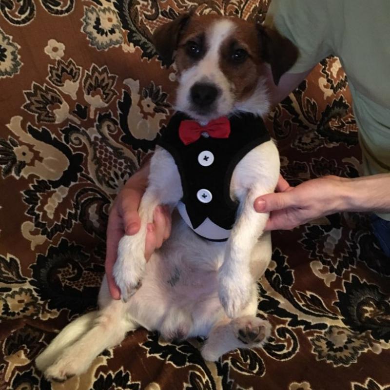 Gilet-pour-chien-Laisse-harnais-de-chien-pour-les-petits-chiens-moyens-Robe-Q2T3 miniature 11
