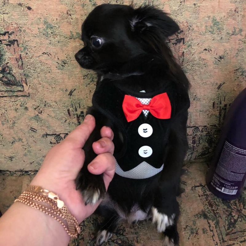 Gilet-pour-chien-Laisse-harnais-de-chien-pour-les-petits-chiens-moyens-Robe-Q2T3 miniature 13