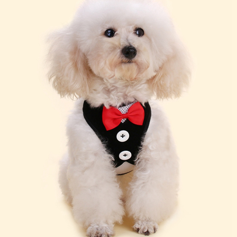 Gilet-pour-chien-Laisse-harnais-de-chien-pour-les-petits-chiens-moyens-Robe-Q2T3 miniature 14