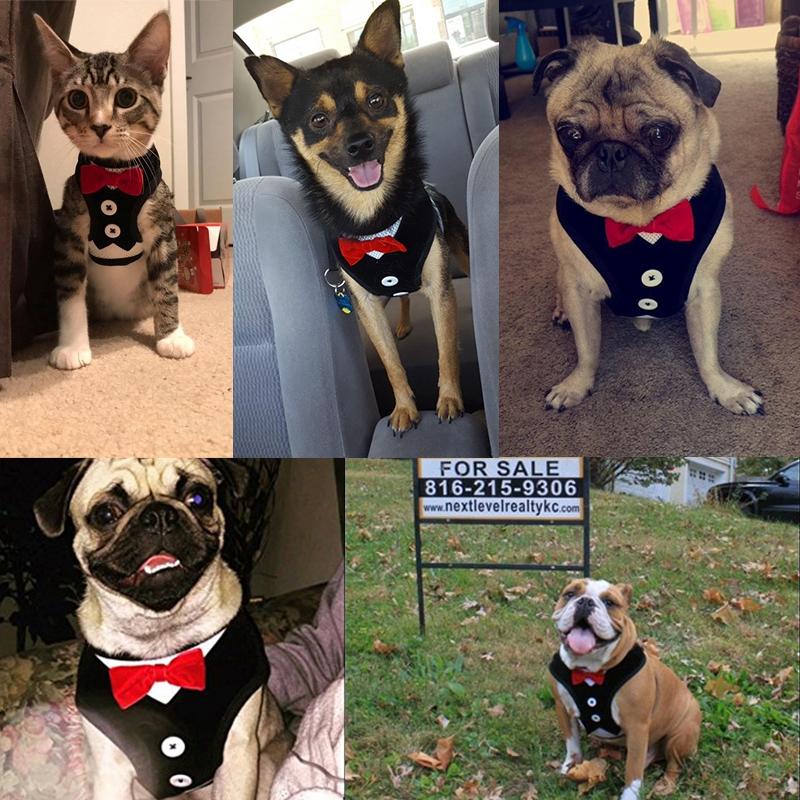 Gilet-pour-chien-Laisse-harnais-de-chien-pour-les-petits-chiens-moyens-Robe-Q2T3 miniature 17