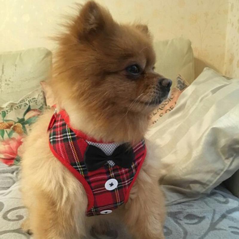 Gilet-pour-chien-Laisse-harnais-de-chien-pour-les-petits-chiens-moyens-Robe-Q2T3 miniature 24