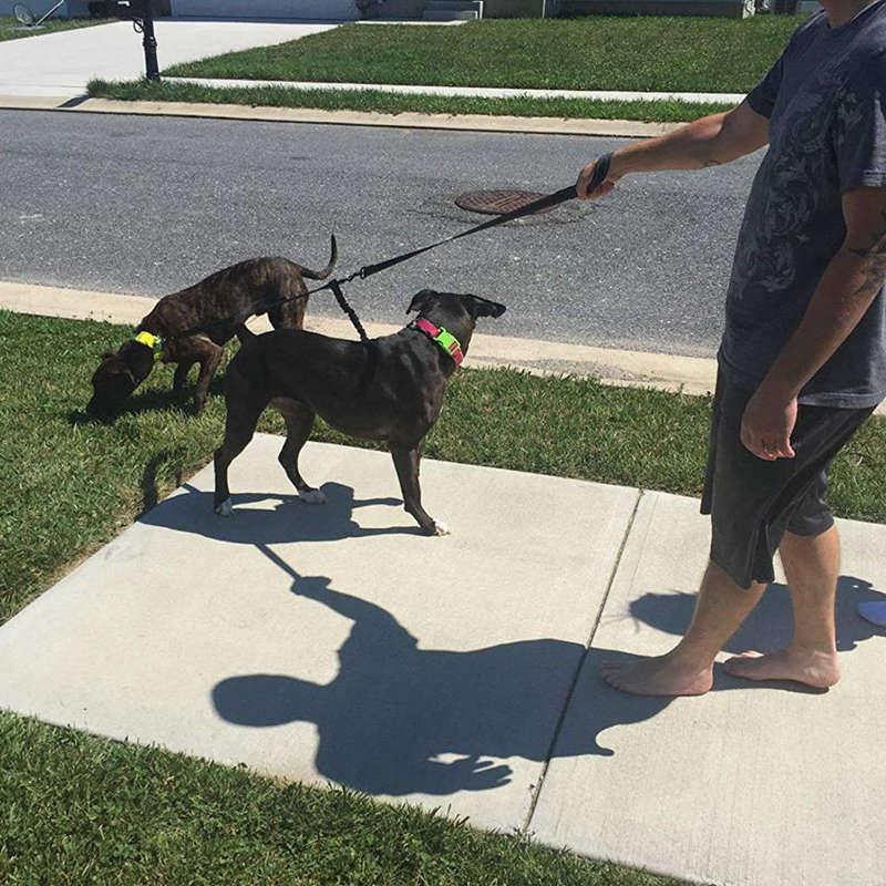 5X(Doppelte Hunde Leine, Kein Verhedderter Hund Mit Zwei Hunde Hunde Hunde Füll Griffen MS  | Ich kann es nicht ablegen  955122