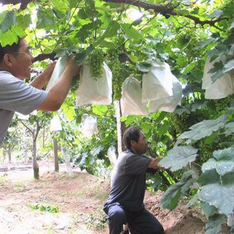 1X-100Pcs-Grape-Protection-Bags-For-Fruit-Vegetable-Grapes-Mesh-Bag-Against2D6 thumbnail 10