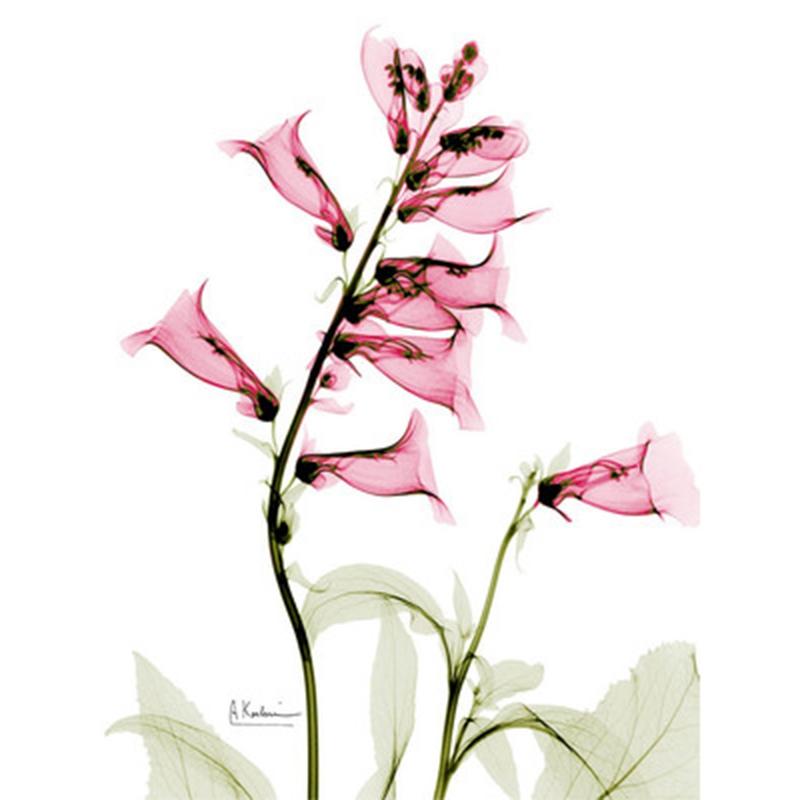 1X-3Pcs-Beautiful-Elegant-Flowers-Pictures-Prints-on-Canvas-Wall-DecorationB2X7 thumbnail 8