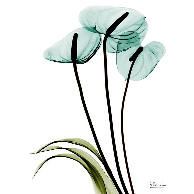 1X-3Pcs-Beautiful-Elegant-Flowers-Pictures-Prints-on-Canvas-Wall-DecorationB2X7 thumbnail 13