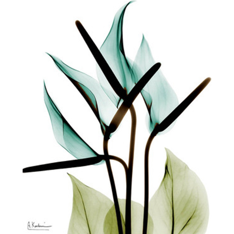 1X-3Pcs-Beautiful-Elegant-Flowers-Pictures-Prints-on-Canvas-Wall-DecorationB2X7 thumbnail 15