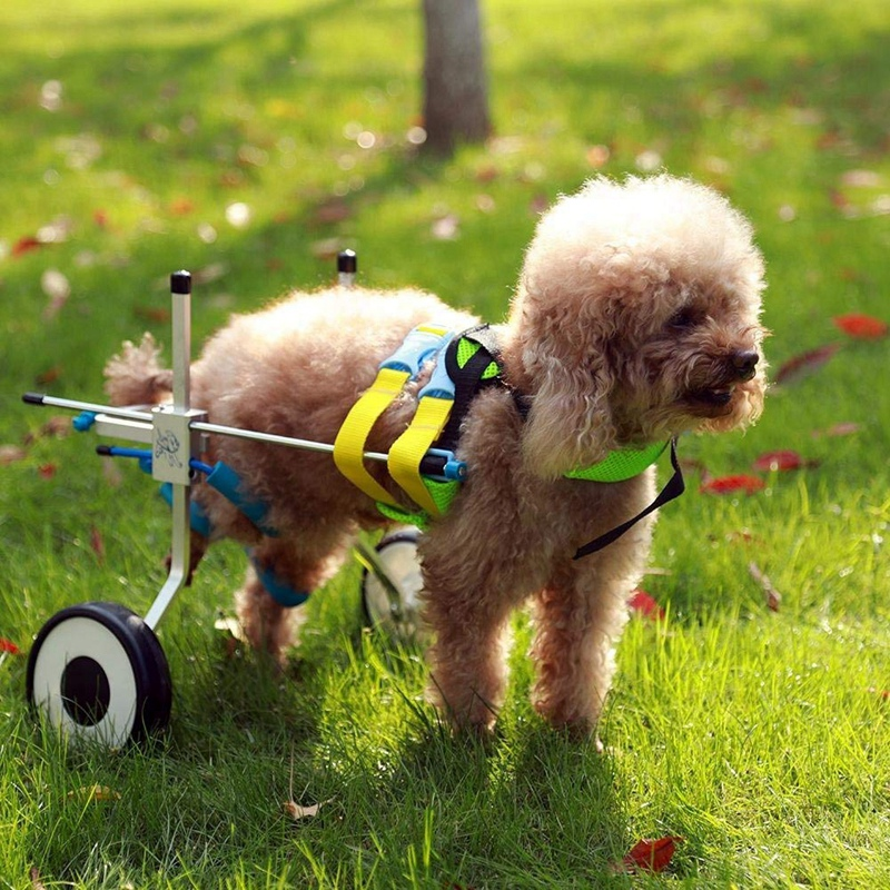 US Seller S//M//L Pet Dog Wheelchair For Handicapped Hind Legs Dog//Cat To walk