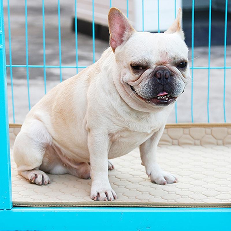 Indexbild 9 - 2X-Rutschfeste-Waschbare-Hunde-Haustier-Windel-Matte-Urin-Absorbierende-Umg-X1U5